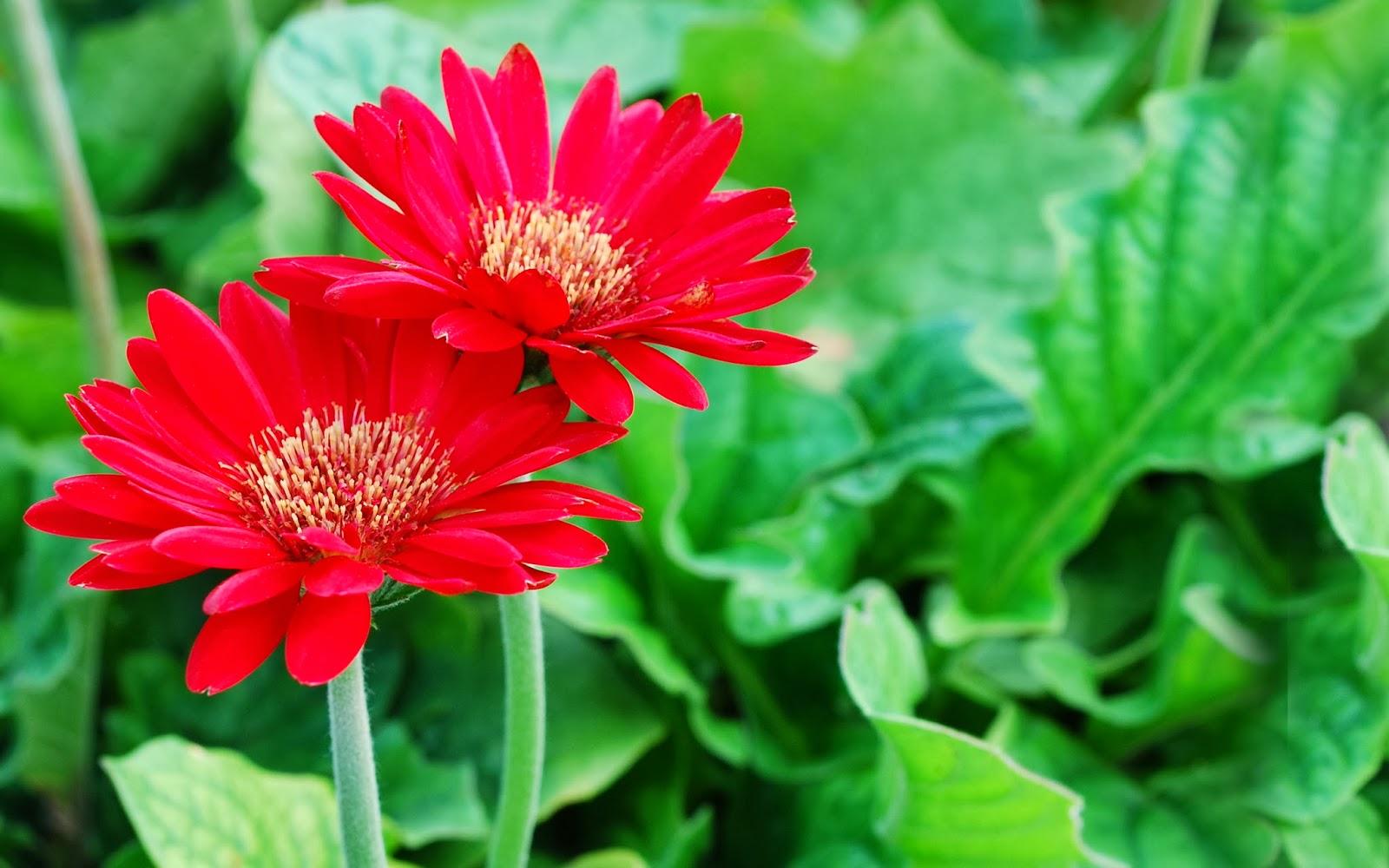 Hoa phăng vẻ đẹp đa dạng. 5 món quà đáng chọn cho phụ nữ yêu