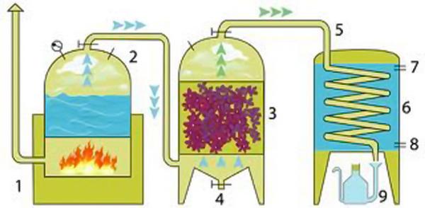 Hiểu để chọn được loại tinh dầu phù hợp